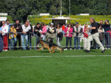 Wallaby vom Kapellenberg SG 9 BSZS 2010